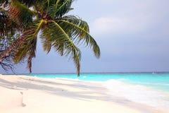 Palmier sur une côte d'océan Photographie stock