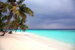 Palmier sur une côte d'océan Photographie stock libre de droits