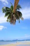 Palmier sur une plage en EL Nido Philippines Photographie stock libre de droits