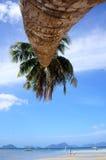 Palmier sur une plage en EL Nido Philippines Image libre de droits