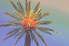 Palmier sur une plage L'angle faible a tiré du treeline avec le feuillage sur le fond coloré de ciel Tonalité géniale de hippie à Photographie stock