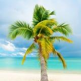 Palmier tombé Photos libres de droits