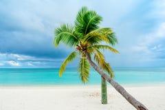 Palmier tombé Photographie stock libre de droits