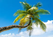 Palmier tombé Images libres de droits