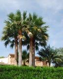 Palmier trois devant une villa Photo stock