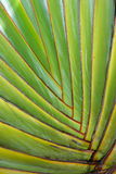 Palmier tropical Photographie stock