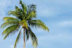 Palmier tropical simple avec le ciel bleu et les nuages photos libres de droits