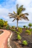 Palmier tropical sur la promenade côtière de Blanca de Playa Photographie stock libre de droits