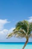 Palmier, turquoise et océan tropical bleu Photo stock