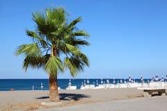 Palmier vert s'élevant au bord de la mer Images stock