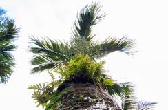 Palmier vibrant d'un paradis tropical photo libre de droits