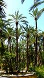 Palmiers à Elche Photographie stock