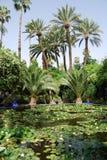 Palmiers à l'étang Photo stock