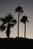 Palmiers à l'aube Photos libres de droits