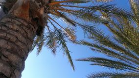 Palmiers à la lumière du soleil photo stock