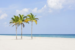 Palmiers à la plage Photographie stock