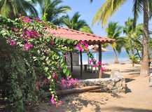 Palmiers à la plage de Ropa de La Images libres de droits