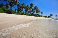Palmiers à une plage tropicale Image stock