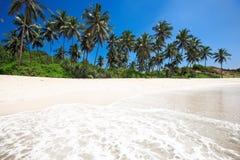 Palmiers à une plage tropicale Images stock