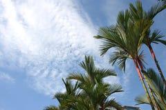 Palmiers photo libre de droits