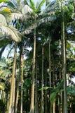 Palmiers Photos stock