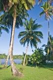 Palmiers photographie stock libre de droits