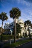 Palmiers atlantiques de rue Photo libre de droits