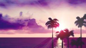 Palmiers au coucher du soleil banque de vidéos