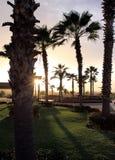 Palmiers au coucher du soleil Image libre de droits