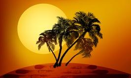 Palmiers au coucher du soleil Photo libre de droits