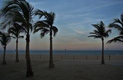 Palmiers au coucher du soleil, San Jose Del Cabo, Mexique images stock