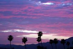 Palmiers au-dessus de ciel nuageux cramoisi Photographie stock libre de droits