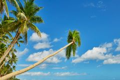 Palmiers au-dessus de l'eau sur la plage de Boracay Photo stock