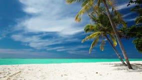 Palmiers au-dessus de lagune tropicale avec la plage blanche