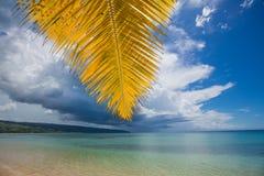 Palmiers au-dessus de lagune tropicale avec la plage sauvage photo libre de droits