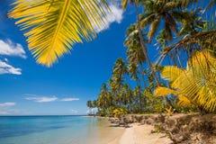 Palmiers au-dessus de lagune tropicale avec la plage sauvage photos libres de droits