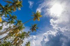 Palmiers au-dessus de lagune tropicale avec la plage sauvage image stock