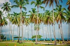 Palmiers au-dessus de lagune tropicale avec la plage sauvage photographie stock libre de droits