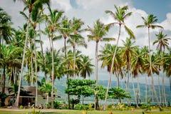 Palmiers au-dessus de lagune tropicale avec la plage sauvage photographie stock