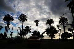 Palmiers au-dessus du ciel Photographie stock