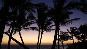 Palmiers au lever de soleil clips vidéos