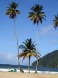 Palmiers au Trinidad Photo libre de droits