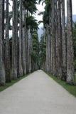 Palmiers aux jardins botaniques Rio de Janeiro Brazil photographie stock