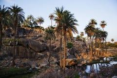 Palmiers avec des formations de roche Images libres de droits