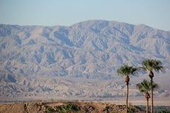 Palmiers avec la montagne de désert Image stock