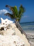 Palmiers avec la noix de coco et le lézard Images libres de droits