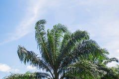 Palmiers avec le ciel Photographie stock
