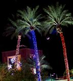 Palmiers avec les lumières décoratives : Noël en Arizona, Etats-Unis Image stock