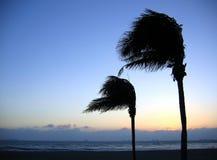 Palmiers balançant dans le vent Photo stock