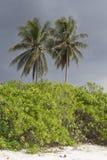 Palmiers, buissons et plage sablonneuse avec le ciel nuageux Images libres de droits